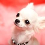 犬のノミ ダニ駆除方法。症状ってどんな?予防薬ってあるの?
