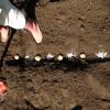 秋ジャガイモの植える時期はいつ?種芋は切らないの?水やりは?