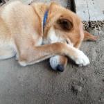 犬にも花粉症ってあるの?症状ってどんな感じ?対策は?