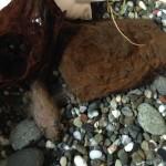 夏休みの自由研究 小学生におすすめ!地元の川の生き物を調べてみよう!