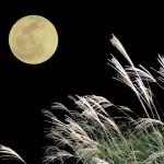 吉野公園 十五夜マーケットが今年も開催!美しい月を吉野公園で見よう!