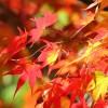 鹿児島の紅葉の時期はいつ?鹿児島の紅葉狩りオススメスポットは?