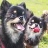 鹿児島で犬とおでかけ!鹿児島・健康の森公園に犬と一緒に行ってみた!